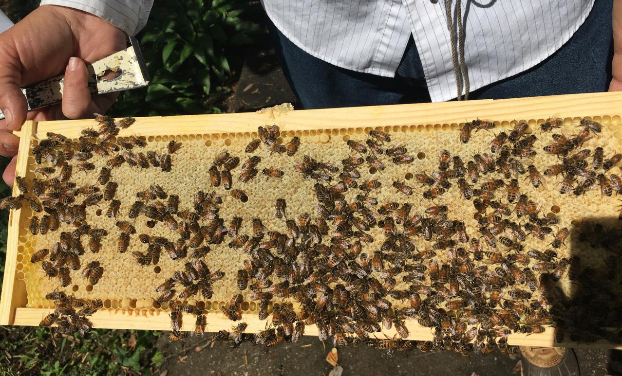 Bee Daddies Apiaries